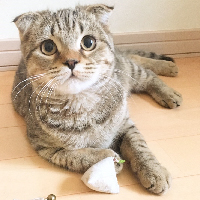 にゃんこいち~Cat lovers market